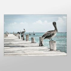 Check out our new canvases. We're adding 10-15 a week. Thanks to our wonderful artists.  Ocean Wharf #Pelicans Close Up #Canvas Print Artistic #Ocean Wall Art    We pride ourselves in creating the highest quality canvas prints due to our state of the art printing ... #canvas #art #artistic #xddesigns #painting #print #giclee #pelicans #birds #ocean #dock #photograph