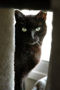Black Cat Society - I see you!