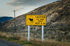 sign in Kamloops, they had to erect high fences to prevent them from getting on the highway and getting killed