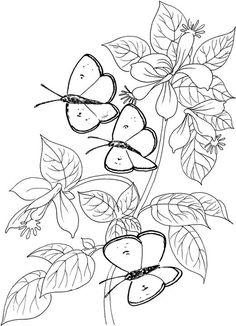 butterfly7.jpg (521×720)