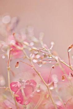 Nature Végétaux Rose