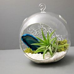 Earth and Water Agate Terrarium