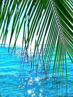 Aloita Resort, I Love The Beach, Tropical Paradise, Ocean Beach, Beach Fun, Belle Photo, Beautiful Beaches, Beautiful Beautiful, Palm Trees