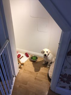 My dog den Den, Animals, Animales, Animaux, Animal, Animais