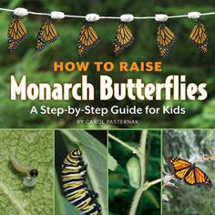 How to Raise Monarch Butterflies: A Step-by-Step Guide for Kids by Carol Pasternak Butterfly Unit Study for Homeschool http://www.amazon.com/dp/1770850023/ref=cm_sw_r_pi_dp_nsNatb1AE99J6Z20