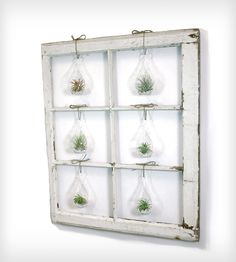 Window Frame Terrarium | such a cool idea!