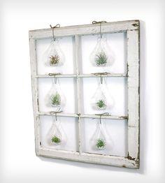 Window Frame Terrarium | such a cool idea!