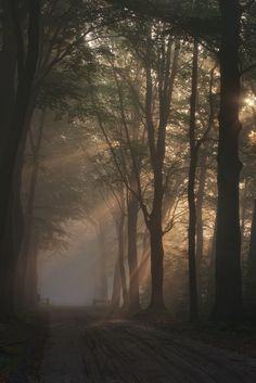 dreams of dawn - A very early morning walk in a foggy forrest near my hometown. Looked like i was still dreaming. Nature Aesthetic, Brown Aesthetic, Aesthetic Pictures, Aesthetic Wallpapers, Nature Photography, Morning Photography, Beautiful Places, Beautiful Witch, Scenery