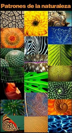 Natural patterns and designs