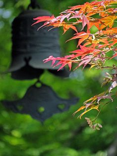 Anraku-ji's Red Maples of Spring |Anraku-ji is a Jōdo sect Buddhist temple in Kyoto that was built between 1532 and 1555 as a memorial to two priests from the Kamakura period, Juren and Anraku, who gave the tonsure to two of retired emperor Go-Toba's favorite ladies-in-waiting in 1207. Go-Toba wasn't happy about his two favorites becoming nuns and executed the priests who ordained them.