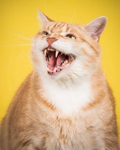Peter Thorne Captures Adorable Photos of Toronto's Chubby Cats