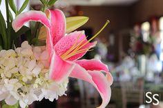 Lirio Rosado/Pink Lilie