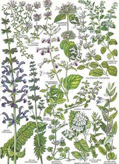 1969 bookplate. British wild flowers.