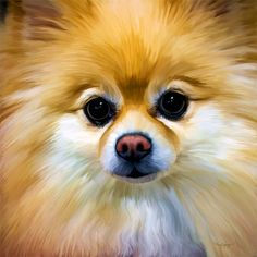 Pomeranian awesome painting(: