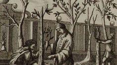 В августе 1826 года, в дни коронования Николая I, цена на яблоки в Москве поднялась до небес. Спелые наливные яблоки нового урожая раскупались гостями Первопрестольной по рублю серебром за штуку. Эти вкуснейшие яблоки и в начале XX века оставались в России лакомством богачей, поскольку уход за такими яблонями требовал знаний и умений, недоступных большинству садоводов.