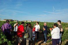 Intensa actividad de la Ruta del Vino Cigales en la feria Intur 2014 con diversas presentaciones sobre historia y gastronomía https://www.vinetur.com/2014112717515/intensa-actividad-de-la-ruta-del-vino-cigales-en-la-feria-intur-2014-con-diversas-presentaciones-sobre-historia-y-gastronomia.html