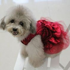 Urparcel Dog Cat Bow Tutu Dress Lace Skirt Pet Puppy Dog Clothes Costume Red S - http://www.thepuppy.org/urparcel-dog-cat-bow-tutu-dress-lace-skirt-pet-puppy-dog-clothes-costume-red-s/