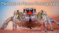 Methods in Macro Photography with Thomas Shahan
