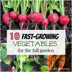Speedy vegetable plants are a good choice for fall gardening. They can be used to fill in spots in the vegetable garden where plants have been harvested or grown in containers for a portable garden space....