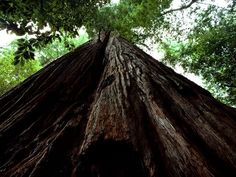 Photo: Tall Tree Grove in Redwood National Park