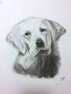 Dogs, Drawings, Animaux, Doggies, Pet Dogs, Dog