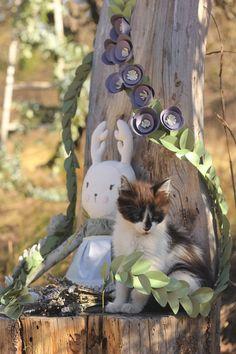 Mi Casita en el Bosque: Last Days of Winter ♥ cat lover ♥ Prairie picnic