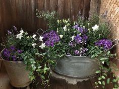 Zinkwanne Zinkkübel Mit Lila Und Weissen Blumen