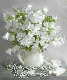White flowers in white vase