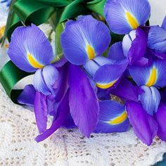 Iris Flower Meaning