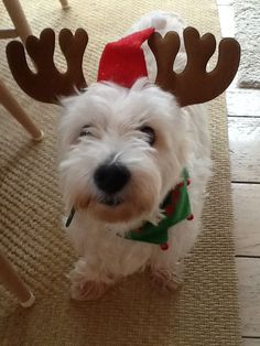 I'm on standby in case Santa needs an extra reindeer.