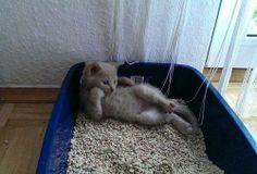 cute cat, hahah
