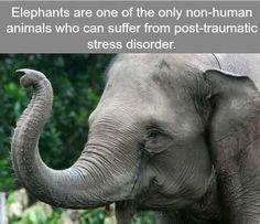 Elephant - My animal friends - Animals Documentary -Kids educational Videos Asian Elephant, Elephant Love, Wild Elephant, Elephant Trunk, Elephant Theme, Funny Animals, Baby Animals, Cute Animals, Wild Animals