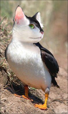 Animal raro¿gato/pato/ave?