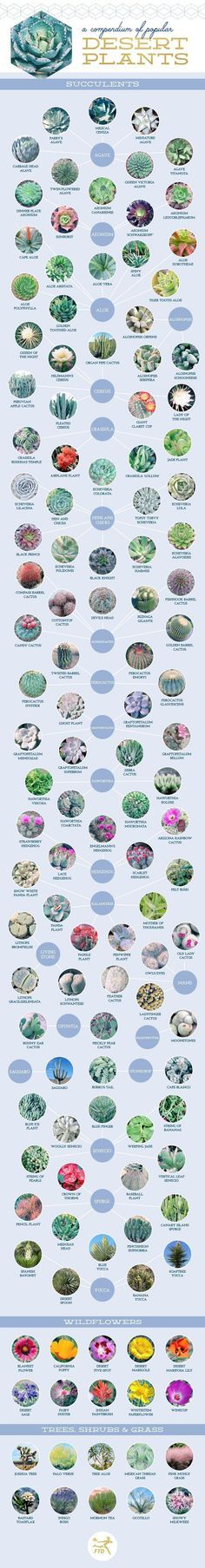 Don't know the name of your succulent or cactus plant? This great Compendium of 127 Stunning Desert Plants and Succulents may help. Image shared with permission of ftd.com. For help on propagating succulents please visit http://thegardeningcook.com