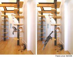 Los gatos son compañeros de vida en el hogar. Por eso es necesario que nos aseguremos de que estén cómodos y que sus necesidades sean satisfechas. Estas divertidas criaturitas nos llenan la vida de…