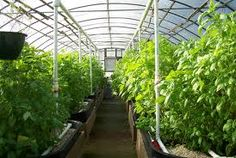 How 1 MILLION Pounds Of Organic Food Can Be Produced On 3 Acres.I came across this video of a man who has figured out a system to grow 1 million pounds of food on 3 acres each and every year. How are they doing this?