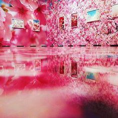 【red_or_blue_】さんのInstagramをピンしています。 《昨日から静岡県立美術館で開催されている「蜷川実花展」に行ってきました。 壁も床も桜が満開のコーナーは圧巻!! #県立美術館 #蜷川実花 #蜷川実花展 #蜷川実花展静岡 #桜 #さくら #cherryblossom #ninagawamika #art #beautiful #photographer #photo》