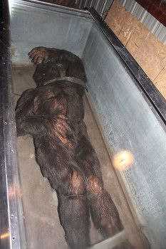 In the 60s, the Minnesota Iceman was put on display but disappeared as quickly as it appeared.  The creature has been found once again and will be on display again.