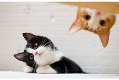 Los gatos tienen un GPS interno.