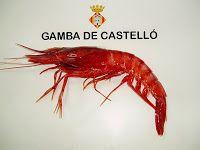 "Nueva mirada al mar: Gamba roja ""aristeus antennatus"""