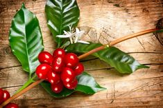 Red coffee beans and flower on a branch of coffee tree. Branch of a coffee tree with ripe fruits, flowers and leaves over wooden background Stock Photo & Stock Images Coffee Farm, Coffee Plant, Coffee Flower, Tree Wall Murals, Coffee World, Or Noir, Ripe Fruit, Coffee Illustration, Coffee Store