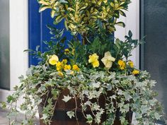 Plant a Fragrant Winter Container Garden --> http://www.hgtvgardens.com/container-gardening/planting-a-fragrant-winter-container-garden?soc=pinterest