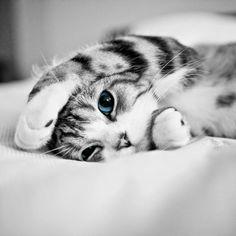 Super schattige kitten, zwart wit