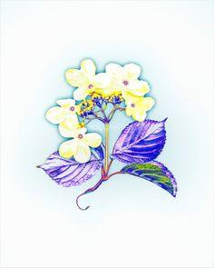Lacecap Hydrangea Art  8x10 print  Purple Yellow by modpretties, $24.00