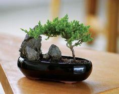 Японские мини-садики. - Цветочный форум