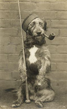 Vintage dog with pipe, hat and baton...