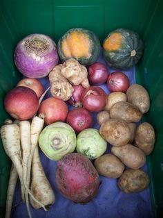 January 15, 2013 -This week's local box has Empire apples (VT), turnips, beets and parsnips (MA), kohlrabi (NY), onions and potatoes (ME), radishes (MA), sunchokes (VT), and acorn squash (NY). Enjoy!