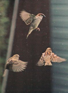#THREE birds in flight