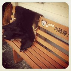 ベンチに熊の毛皮! Photo by ishi_zerodate • Instagram