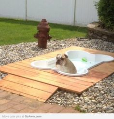 I'm all for getting your dog a little plastic kiddie pool to sit in...but an in-ground doggie pool - awesome!!